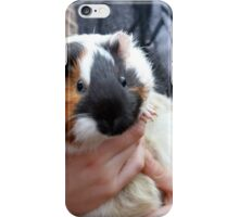 guinea pig iPhone Case/Skin