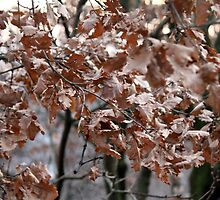 dry leaves on the tree by spetenfia