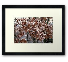 dry leaves on the tree Framed Print