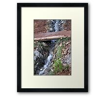 source of the stream in the woods Framed Print