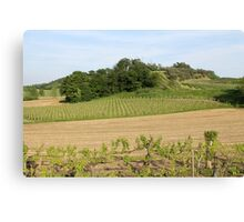 cultivated fields in spring Canvas Print