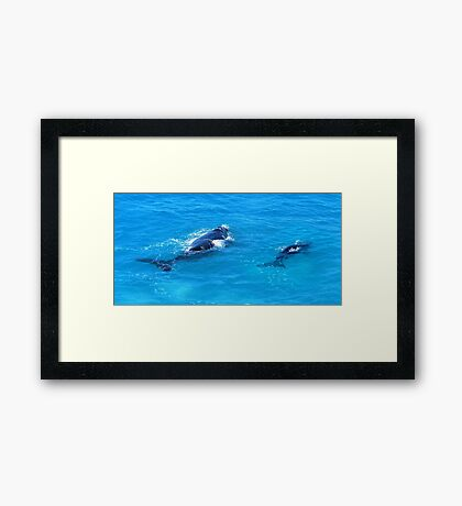 'Southern Right Whales' Framed Print