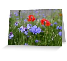 cornflowers and poppies Greeting Card