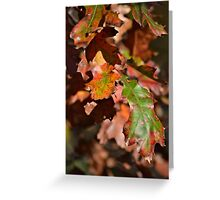 The Autumn Oaks Greeting Card