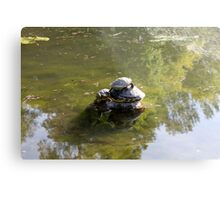 turtles on lake Metal Print