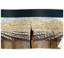 Weathered Wood Piling Poster