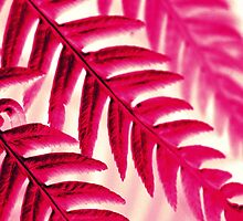 Nature Pattern - Fern (Red Pink) by Kitsmumma