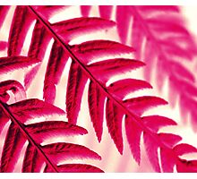 Nature Pattern # 1 - Fern (Red Pink) Photographic Print
