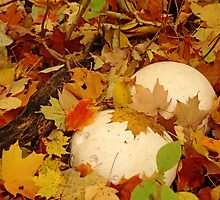 Autumn Puffballs by Debbie Oppermann