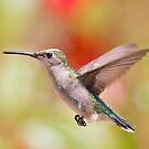 Hummingbird in Action by Bonnie T.  Barry