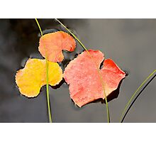 Floating Leaves Photographic Print