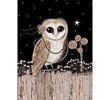 Little Barn Owl Photographic Print