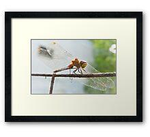 Red Dart Dragonfly Framed Print