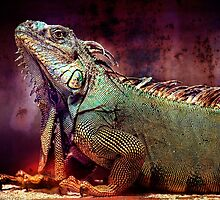 Here Be Dragons by Heather Allen
