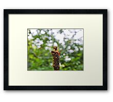 Red Dart Dragonfly 3 Framed Print