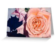 Rose Splendour Greeting Card