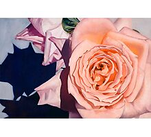 Rose Splendour Photographic Print