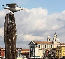 Venice on wings by Gabriele M - emmarts