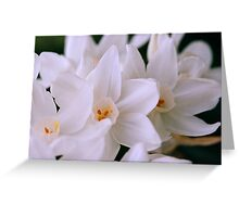Family of White Jonquils Greeting Card