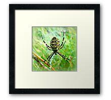 Wasp Spider ~ Argiope bruennichi Framed Print