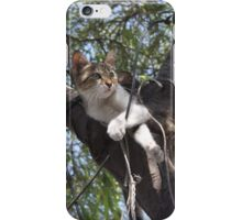 Bi-Color Tabby Cat In Tree 2 iPhone Case/Skin
