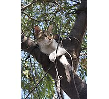 Bi-Color Tabby Cat In Tree 2 Photographic Print