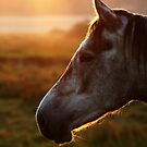 10.9.2014: Horse on Pasture at September Evening V by Petri Volanen