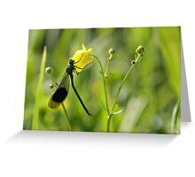 Male Banded Demoiselle (Calopteryx splendens) on a flower Greeting Card