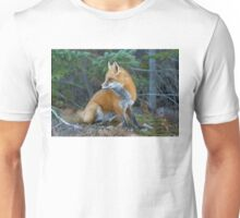 Red fox in Algonquin Park Unisex T-Shirt
