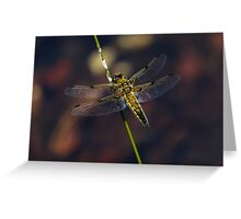 Four-spotted chaser (Libellula quadrimaculata) Greeting Card
