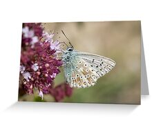 Chalkhill Blue butterfly (Polyommatus coridon) feeding on  Wild Marjoram flowers Greeting Card