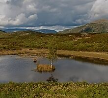 Lily Tarn Panoranic  by Roger Green