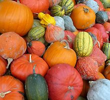 Pumpkins and Squashes by Circe Lucas