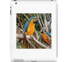 Blue And Gold Macaw  iPad Case/Skin