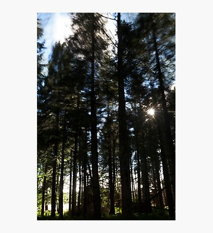 wind blown trees Photographic Print