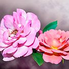 Two Roses by PhotosByHealy