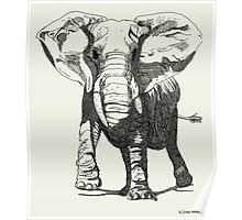 Elephant Pen and Ink Drawing Poster
