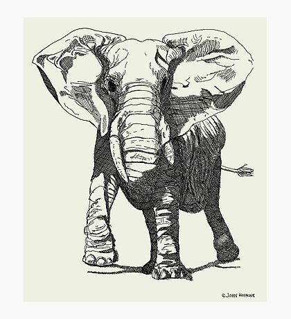 Elephant Pen and Ink Drawing Photographic Print