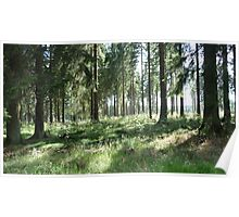 German Forest Glade Poster