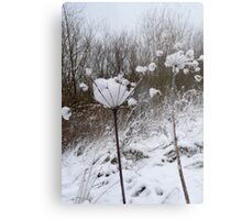 Annes Lace in Winter Metal Print
