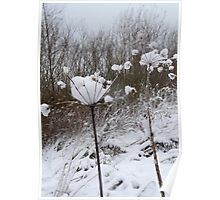 Annes Lace in Winter Poster