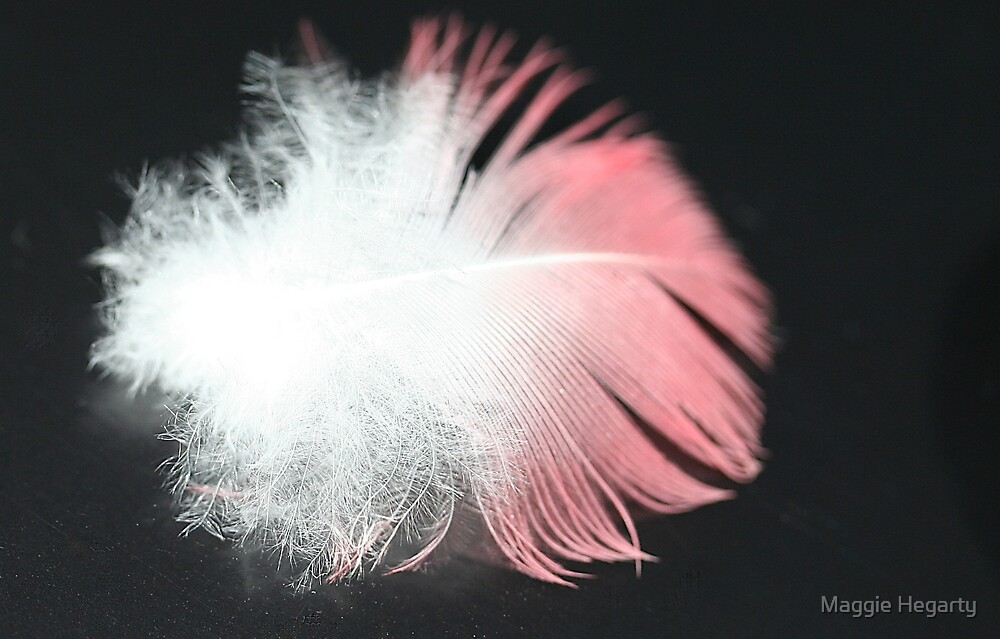 Fluffy feather by Maggie Hegarty