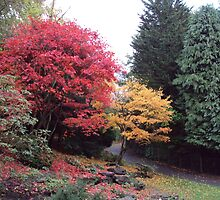Autumn Glory in Pittencrieff Park by biddumy
