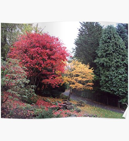 Autumn Glory in Pittencrieff Park Poster