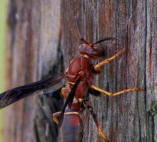 Brown wasp gathering fibers Sticker