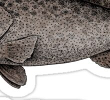 Grouper goliath Sticker
