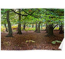 Autumn at Ashridge Poster