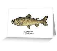 Brown trout Greeting Card