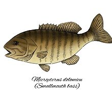 Smallmouth bass by Eugenia Hauss