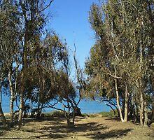 Triton's Trees by kashmirecho